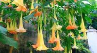 Lạng Sơn: 3 người hôn mê, ngừng thở sau khi ăn hoa dại trên rừng