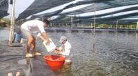 Xây công trình phụ trên đất nông nghiệp: UBND TP.HCM thống nhất cho thí điểm
