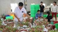 Thái Lan bất ngờ dựng hàng rào kỹ thuật, trái cây xuất khẩu gặp khó