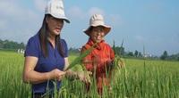 Giống lúa mọc nhanh, thích ứng tốt mà lại chống chịu sâu bệnh mạnh mẽ ở Tuyên Quang, giúp nông dân yên tâm sản xuất
