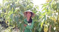 """Cô gái xứ Quảng chinh phục trái nhàu hoang, biến thành """"thần dược"""" hỗ trợ chữa nhiều bệnh"""