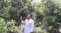 Hậu Giang: Trồng cây cà na Thái ra trái ăn lạ miệng, ông nông dân này bất ngờ giàu lên