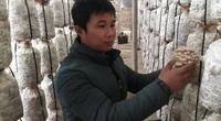 Thái Nguyên: Trồng cây mọc từng chùm trong túi nilon, anh kỹ sư cơ khí thu tiền đều như vắt chanh