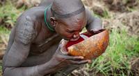Rùng mình với bộ tộc uống tiết bò tươi để tăng cường sinh lực
