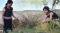 Những thứ rau rừng đặc sản tên độc lạ ở tỉnh Kon Tum, nếm thử một lần nhớ cả đời
