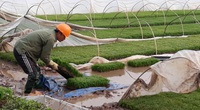 Hà Nội: Khuyến nông thúc đẩy sản xuất lớn, tạo sản phẩm sạch