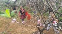 Dán tem lên gốc cây đào vườn để bán, nông dân tỉnh Sơn La đồng tình, nhưng có 1 băn khoăn bất ngờ