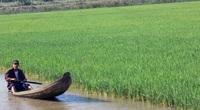 Bến Tre: Thả tôm càng xanh vô ruộng lúa, cuối vụ nông dân nhận điều bất ngờ này