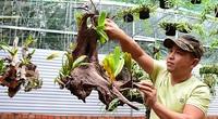 Đam mê lan rừng khi mới 15 tuổi, nay chàng nông dân trẻ này có tiền tỷ trong tay