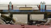 Phú Yên: Đến khổ, gió mùa Đông Bắc hoạt động mạnh, nông dân đang mất những thứ này