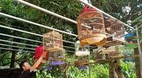"""Hé lộ tuyệt chiêu nuôi chim, chơi chim cảnh của 1 """"cao thủ"""" tỉnh Cao Bằng"""