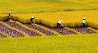 Cán bộ, công chức có được mua đất trồng lúa theo Luật mới?