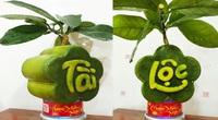 Lạ ở Bến Tre: Trái bưởi in hình hoa mai TÀI LỘC phát giá 1 triệu đồng