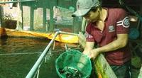 An Giang: Nuôi loài cá tên là chạch nhưng không rúc bùn, chăm dễ như ăn kẹo mà bán nhanh được giá cao
