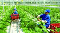 Doanh nghiệp Đài Loan đề xuất triển khai tại Thanh Hóa dự án gì mà có quy mô 2.500ha?