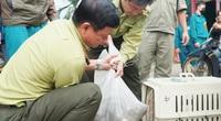 Đã bắt được 6 con trong đàn khỉ đại náo nhà dân ở TP.HCM