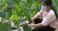 TP.HCM: Sớm đưa huyện Bình Chánh lên quận