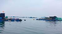 Phú Yên: Tháng nào trong năm 2021 sẽ là thời hạn chót chấm dứt nuôi trồng thủy sản trên vịnh Vũng Rô?