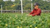 """Thời tiết Tết 2021: Nông dân trồng hoa như """"đánh bạc"""""""