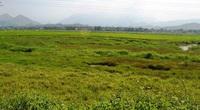 """Đà Nẵng: Giá đất nông nghiệp """"lao dốc"""" chỉ vài chục ngàn/m2"""