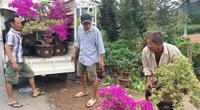Bến Tre: Trồng ra rất nhiều hoa chưng Tết đẹp lạ, nhưng nông dân đang lo điều gì