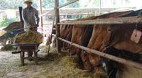 """Long An: Vì sao còn nhiều nông dân khó """"với"""" tới nông nghiệp công nghệ cao?"""