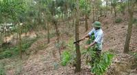 Bắc Ninh: Trồng rừng đạt gần 97%, triển khai 11 giải pháp bảo vệ rừng
