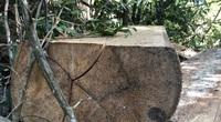 """Phó Thủ tướng Chính phủ chỉ đạo xử lý nghiêm vụ """"xẻ thịt"""" rừng phòng hộ ở Gia Lai"""