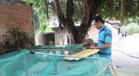 Trai làng tỉnh Tây Ninh ra ruộng vô tình nhặt được 20 ổ trứng côn trùng lạ, ai ngờ nên cơ nghiệp lớn