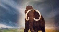 Vì sao voi ma mút khổng lồ bị tuyệt chủng?