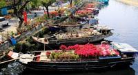 """TP.HCM: Chợ hoa """"trên bến dưới thuyền"""" bến Bình Đông  năm nay có nhiều điểm đặc biệt"""