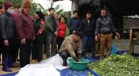 Chống đói rét cho đàn gia súc: Tăng hướng dẫn, siết hỗ  trợ thiệt hại