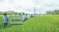 Giống cây trồng Miền Nam chuyển giao thị trường cho đơn vị khác khiến lợi nhuận quý IV giảm hơn 50%