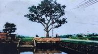 Kể chuyện làng: Đường dừa thương nhớ
