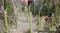 Vườn cỏ lau tím bên hồ Hoàn Kiếm tan hoang chỉ sau 3 tháng hoàn thiện