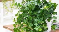 6 loại cây phong thủy tăng tài vận, mang lại bình an cho gia chủ