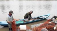 Hậu Giang: Nông dân chộn rộn bắt hàng tấn cá ruộng, cá trê vàng bán 60 ngàn đồng/ký
