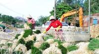 Bình Định: Trúng mùa, dân đào la liệt thứ củ trắng hếu, xếp hàng đống chở vào Nam bán dịp Tết