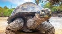 Rùa Galapagos - loài rùa lớn nhất thế giới có thể nhịn ăn trong 1 năm