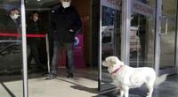 Clip: Cảm động chú chó đợi chủ điều trị Covid-19 suốt nhiều ngày tại cổng bệnh viện