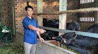 """""""Liều"""" nuôi giống bò lạ to bự, một ông nông dân tỉnh Bình Định giàu lên nhanh, lãi đều như vắt chanh"""