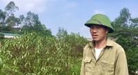 Hà Tĩnh: Hoa đào nở muộn, người trồng lo thất thu