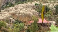 Kể chuyện làng: Mùa Xuân qua sàn