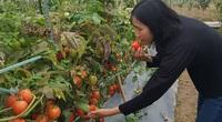 """Hà Nội: Nữ tỷ phú quyền lực trong """"làng rau sạch hữu cơ"""" tiết lộ những bí quyết trong nghề"""
