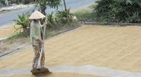 Kể chuyện làng: Nhớ mùi cơm gạo Nàng Thơm với thịt kho tàu chiều 30 Tết