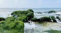 Du lịch sau Tết: Mê hoặc rêu xanh nơi sóng tự tình với đá ở đảo Lý Sơn