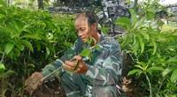 Thái Bình: Tỷ phú ươm cây ăn quả và cây công trình bán khắp thiên hạ