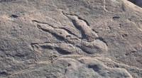 Hoảng hồn, cô bé 4 tuổi phát hiện ra dấu chân khủng long từ 220 triệu năm trước