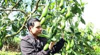 Lâm Đồng: Bất ngờ với vườn trồng cây bơ 034 độc nhất vô nhị ở Bảo Lâm, nhìn đâu cũng thấy trái
