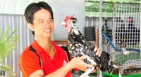 Nuôi gà Quý Phi lạ lẫm và chim trĩ, ông nông dân này vừa nuôi vừa giải trí vẫn kiếm 400 triệu mỗi năm